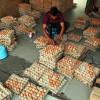 Bisnis Telur Ayam yang Menguntungkan